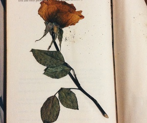 book, pressed flower, and rose image