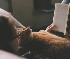 cat, book, and vintage image