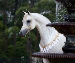 animal, horse, and white image
