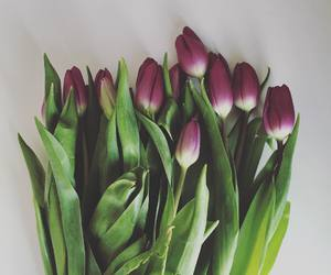 dutch, flowers, and tulips image