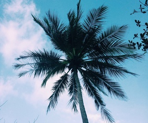 beach, palm trees, and clouds image