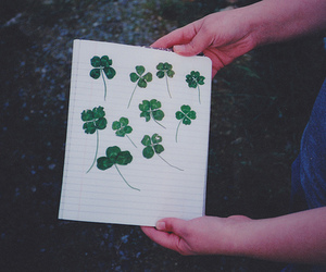 photography, clover, and hipster image