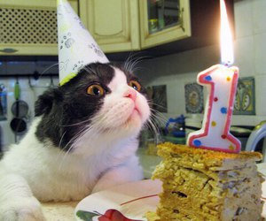 cat, cake, and bday image
