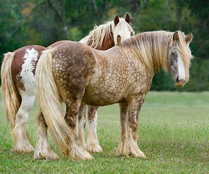 horse and draft horse image