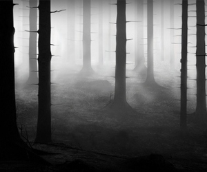 dark, forest, and black and white image