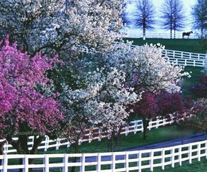 horses, kentucky, and spring image