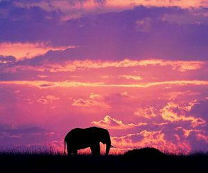 elephant, sky, and animal image