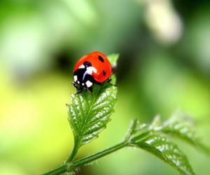 animal, red, and cute image