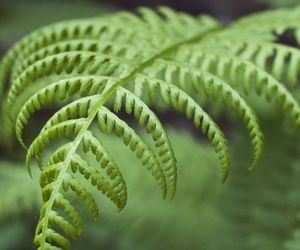 fern, green, and woods image