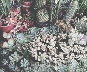 babies, cactus, and flowers image