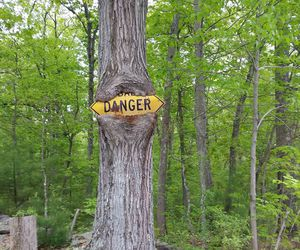 danger, funny, and tree image