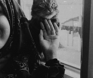 cat, catlove, and hijabgirl image