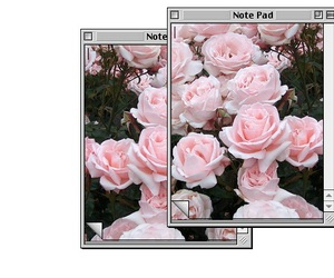 flowers, overlay, and rose image