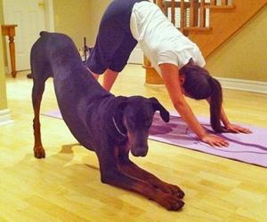 dog, yoga, and funny image