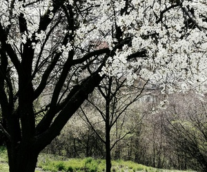 april, beautiful, and blossom image