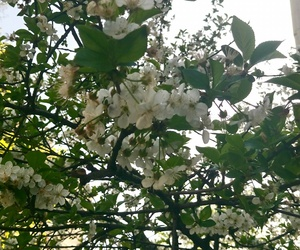 plum, flower, and spring image