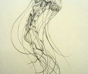 illustration, jellyfish, and art image