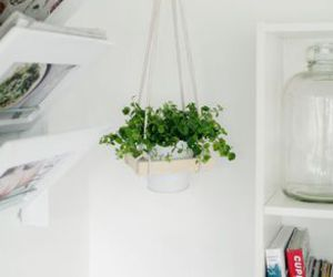 diy, plant, and home image