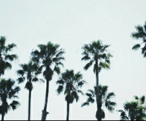 palm trees, header, and summer image