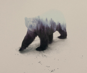 bear, animal, and art image