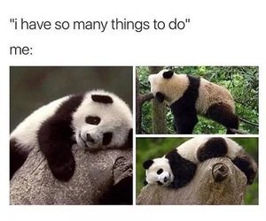 funny, panda, and animal image