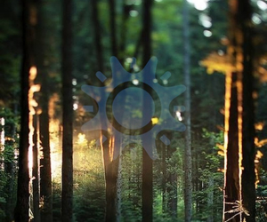 fashion, forest, and light image