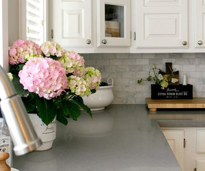 peonies in the kitchen image