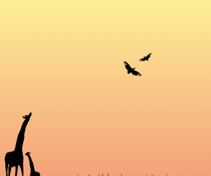 africa, birds, and black image