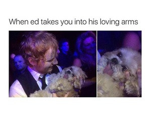 funny, lol, and puppy image