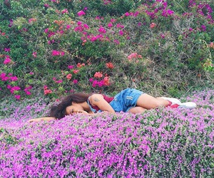 flowers, purple, and solana image