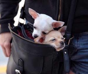 animals, bag, and couple image