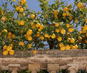 lemon, yellow, and fruit image