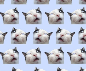 background, love, and cat image