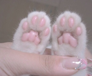 cat, pastel, and pink image