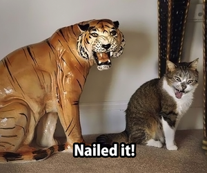 cats, fluffy, and funny image