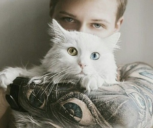 boy, cat, and green image