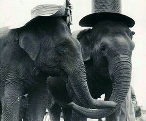 elephant, animal, and hat image