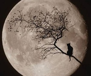 moon, cat, and night image