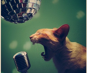 cat, mic, and disco ball image