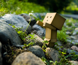 flowers, danbo, and box image