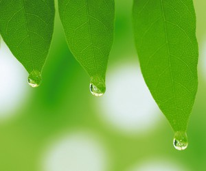 leaves water drops image