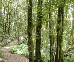 forêt image