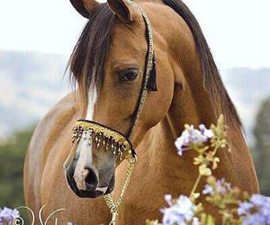 animals, horse, and sweet image