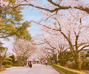 cherryblossom, pink, and spring image
