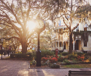south, spanish moss, and sunset image