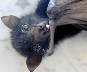 adorable, bat, and cute image