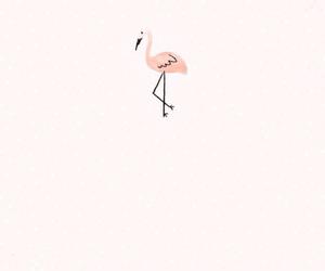 animals, background, and flamingo image