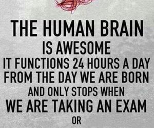brain, love, and exam image