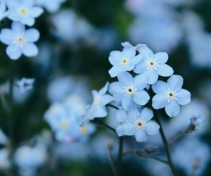 blue and flowers image