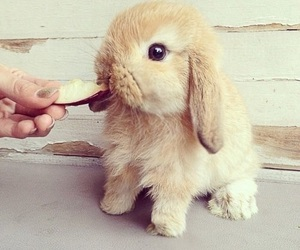 cute, rabbit, and animal image